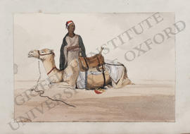 Bilbeis, man with recumbent camel