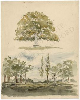Tree, and landscape with trees